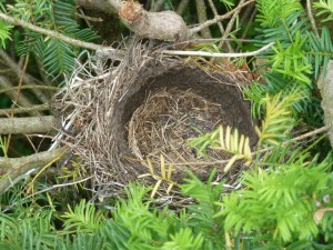 The empty nest!